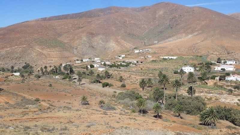 Palm Grove of the Vega del Rio Palma