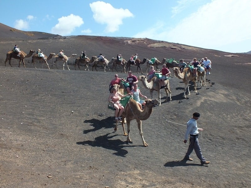 Camel ride through the Timanfaya National Park