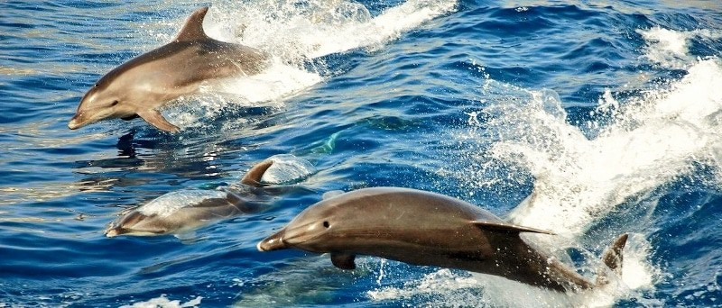 Delfinbeobachtung von Lanzarote