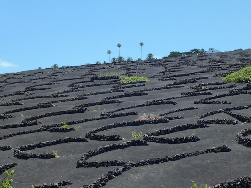 La Geria aus Lanzarote Weinfeld